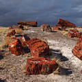 Petrified Forest National Park by James Peterson
