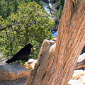 Petrified Raven At Grand Canyon by Merja Waters