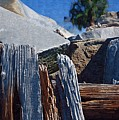 Petrified Wood by Donna Bentley
