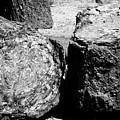 Petrified Wood by Robert J Caputo
