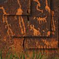 Petroglyphs Agave by Bob Coates
