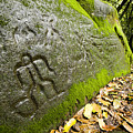 Petroglyphs At An Archaeological Site by Tim Laman