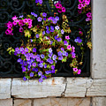 Petunias Through Wrought Iron Window by Donna Corless