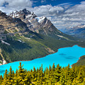 Peyto Blue In The Forest by Adam Jewell
