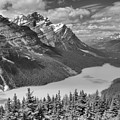 Peyto Blue In The Forest Black And White by Adam Jewell