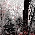 Phantasm In Wildwood by Joseph Noonan