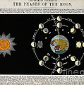 Phases Of The Moon, C. 1846 by Wellcome Images