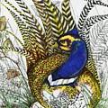 Pheasant Blue by Drew O'Dailey