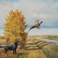 Pheasant Flush by Norman Kelly