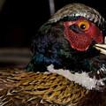 Pheasant In The Eye by Douglas Barnett