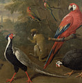 Pheasant Macaw Monkey Parrots And Tortoise  by Charles Collins