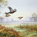 Pheasants In Flight  by Carl Donner