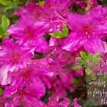Philippians 4 19b by Michelle Greene Wheeler