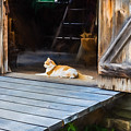 Philipsburg Manor - Gristmill Greeter by Black Brook Photography