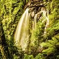 Philosopher Falls, Western Tasmania by Jorgo Photography - Wall Art Gallery