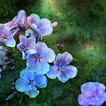 Phlox Impression From The Shadows 1353 Idp_2 by Steven Ward