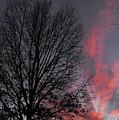Phoenix Cloud Rising by Ginger Repke