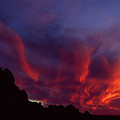 Phoenix Risen by Randy Oberg