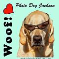 Photo Dog Jackson Mug by Matthew Irvin