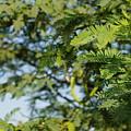 Photo Of Indian Tree by Amar Zala