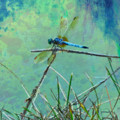 Photo Painted Dragonfly by Kathy M Krause