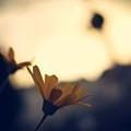 Photo4 by Makoto Nakamura