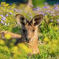 Photogenic Kangaroo by Cameron Richardson