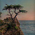 Photogenic Tree by Hanny Heim