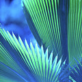 Photograph Of A Royal Palm In Blue by John Harmon