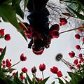 Photographer In Wonderland H084 by Yoshiki Nakamura
