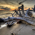 Pic Driftwood by Doug Gibbons