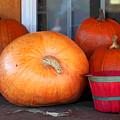 Pick A Pumpkin by Suzanne Gaff