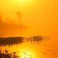 Pickerel Sunrise by Irwin Barrett