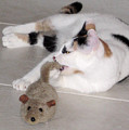 Pico And Toy Mouse by Phyllis Kaltenbach