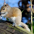 Picture Perfect Squirrel by Theresa Willingham