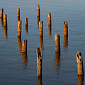 Pier Posts by Bob Phillips