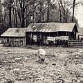 Pig Farm Lot B by John Myers