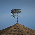 Pig Weathervane Ocean Isle North Carolina by Teresa Mucha