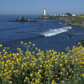 Pigeon Point Panorama by Stan and Anne Foster
