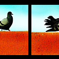 Pigeons in Action