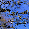 Pigeons Perching In A Tree Together by Sami Sarkis
