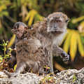 Piggy Back Ride by William Bitman