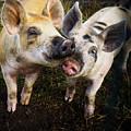 Piggy Love by LuAnn Griffin