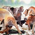 Pigs by Shirley Sykes Bracken