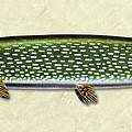 Pike Id by Jon Q Wright