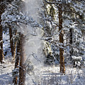 Pike National Forest Snowstorm by Steve Krull