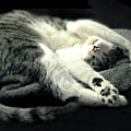 Pilates Cat by Diana Angstadt