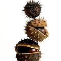 Pile Of Chestnuts by Bernard Jaubert