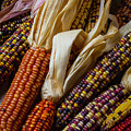Pile Of Indian Corn by Garry Gay
