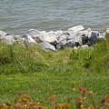 Pile Of Rocks On Shoreline by Chris W Photography AKA Christian Wilson